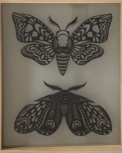 amelia-parsons-moths