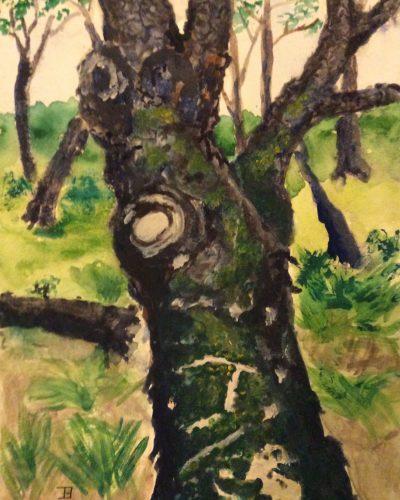 jenny-bell-moss-on-wood
