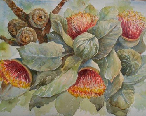 tamayo-leahy-flowering-gums
